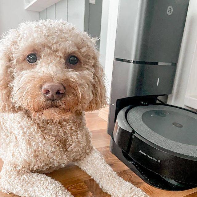 Кучето и фризбито те чакат за дълга разходка. Не губи нито миг от лятото за досадно чистене, защото Roomba® от iRobot® сама ще върне блясъка на подовете и ще елиминира както кучешката козина, така и невидимия с просто око боклук. #irobot#roomba#irobotlove#cleanfloorsmakemehappy