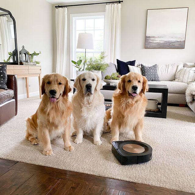 Вземи си дългокосместо куче, казват, но никой не казва как да почистиш козината по пода. Няма и нужда! Roomba сама ще върне блясъка на подовете и ще елиминира както кучешката козина, така и невидимия с просто око боклук. #irobot #irobotroomba #irobotlove